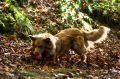 Herbstshooting_Orth_2012_10_093