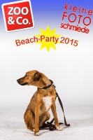 BeachParty_Zoo_Co_2015_07-038