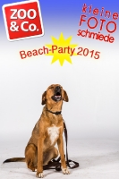 BeachParty_Zoo_Co_2015_07-039