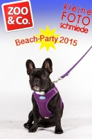 BeachParty_Zoo_Co_2015_07-085