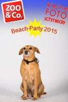 BeachParty_Zoo_Co_2015_07-108