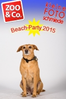 BeachParty_Zoo_Co_2015_07-109