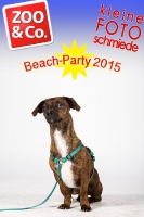 BeachParty_Zoo_Co_2015_07-111