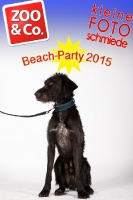 BeachParty_Zoo_Co_2015_07-117