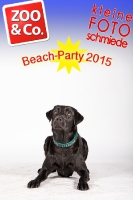 BeachParty_Zoo_Co_2015_07-197