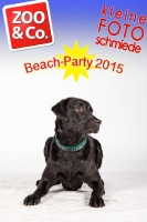 BeachParty_Zoo_Co_2015_07-198
