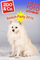 Beach-Party Zoo & Co.