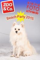Beach-Party Zoo & Co.
