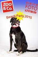 BeachParty_Zoo_Co_2015_07-276