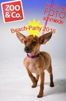 Beach-Party Zoo & Co 2016
