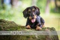 Rogenwieser_2018_07_022