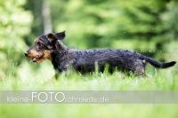 Rogenwieser_2018_07_033