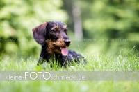 Rogenwieser_2018_07_036